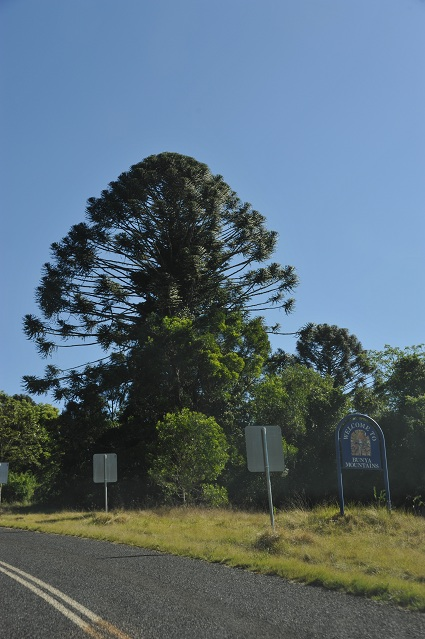 Bunya Mountains sign