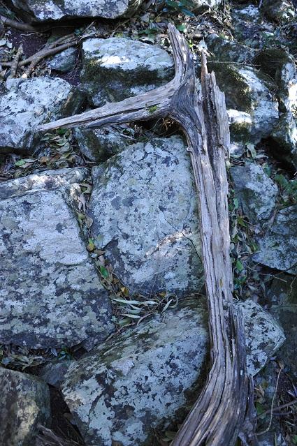 dead horse tree