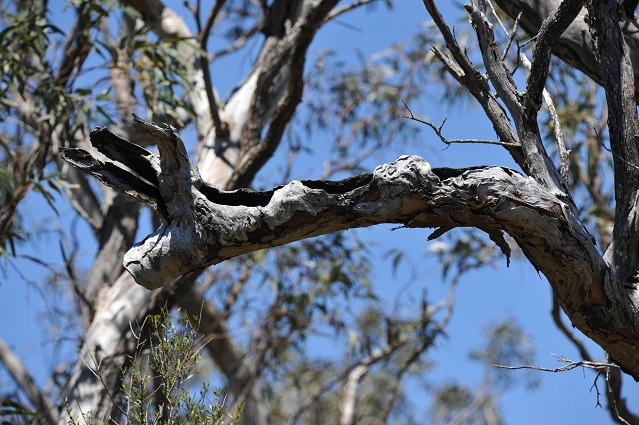 Piglet tree