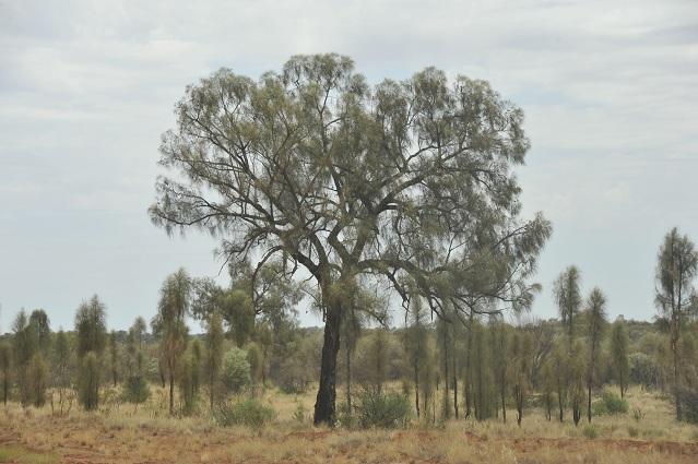 strange trees